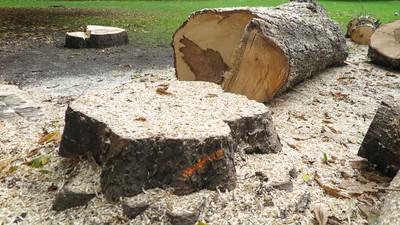 Jak prawidłowo ścinać drzewo