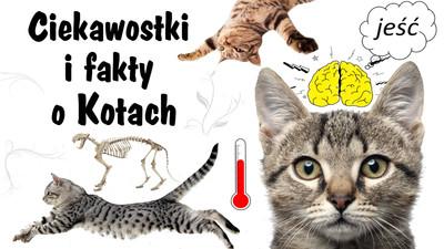 Ciekawostki i fakty o kotach