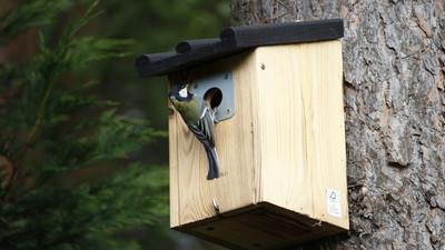 Jak zrobić domek dla ptaków