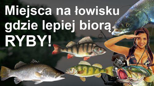 Miejsca na łowisku gdzie najlepiej biorą ryby
