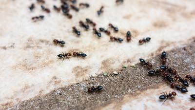 Jak hodować mrówki i pająki