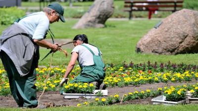 Jak sadzić i siać kwiaty