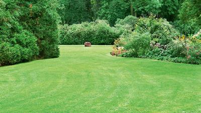 Jak siać trawę i trawnik