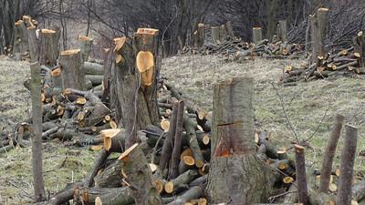 Jak wykopać i usunąć drzewo oraz korzenie