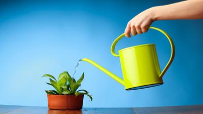 Jak zmiękczyć wodę do podlewania kwiatów