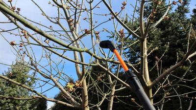 Jak robić opryski drzew i owoców