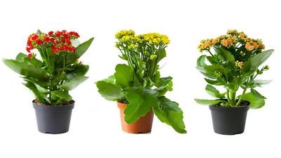 Jak dbać i pielęgnować kwiaty w domu