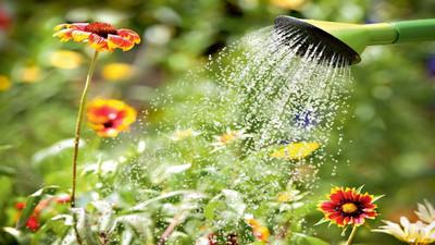 Woda po gotowaniu do podlewania kwiatów