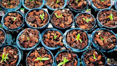 Jak prawidłowo sadzić nasiona roślin