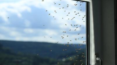 Siatki do okien na owady