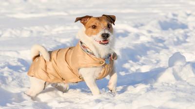 Najlepsze ubrania ochronne dla pasa i kota
