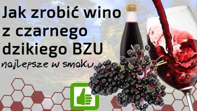 Jak zrobić dobre wino z czarnego dzikiego bzu – najlepsze w smaku