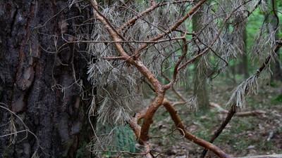 Jak ubrać się do lasu