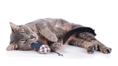 Jakie są najlepsze zabawki dla kota