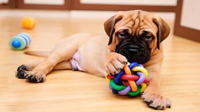 Jakie wybrać zabawki dla psa