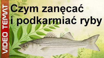Czym zanęcać i karmić ryby