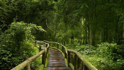 Czemu przebywanie w lesie jest zdrowe
