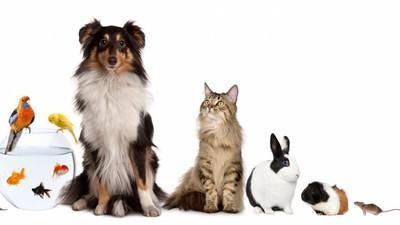 Co zrobić z zwierzętami podczas wyjazdu i wakacji